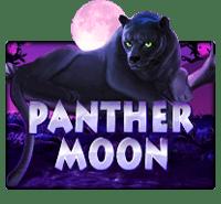 xo สล็อต slotxo panther moon